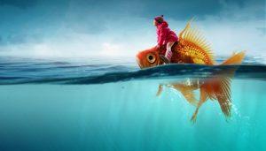 Un symbole de l'imaginaire, le poisson rouge
